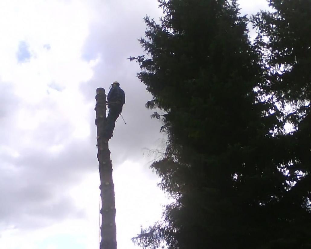 Baum fällen in Berlin & Brandenburg
